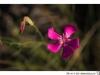 friuli_2012_1913