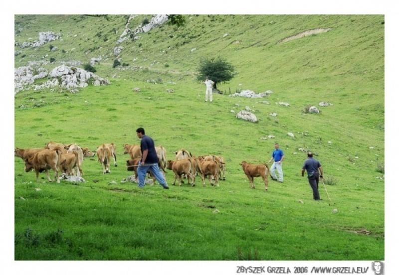 asturia_2006_0280_000_p_018