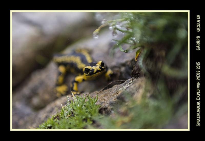 Picos2015-IMG_1491_grzela.eu