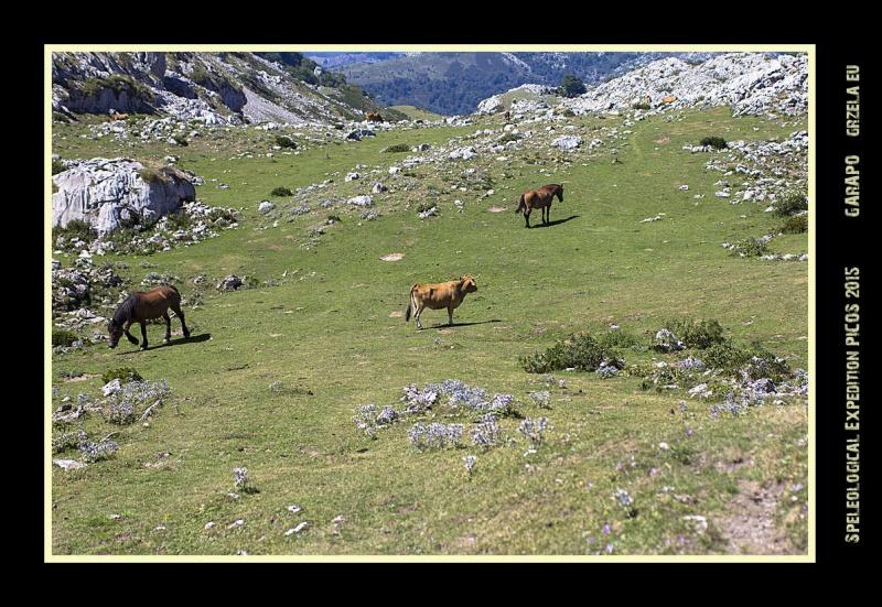 Picos2015-IMG_1680_grzela.eu