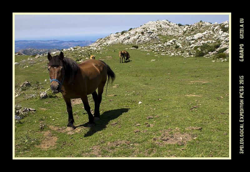 Picos2015-IMG_1682_grzela.eu