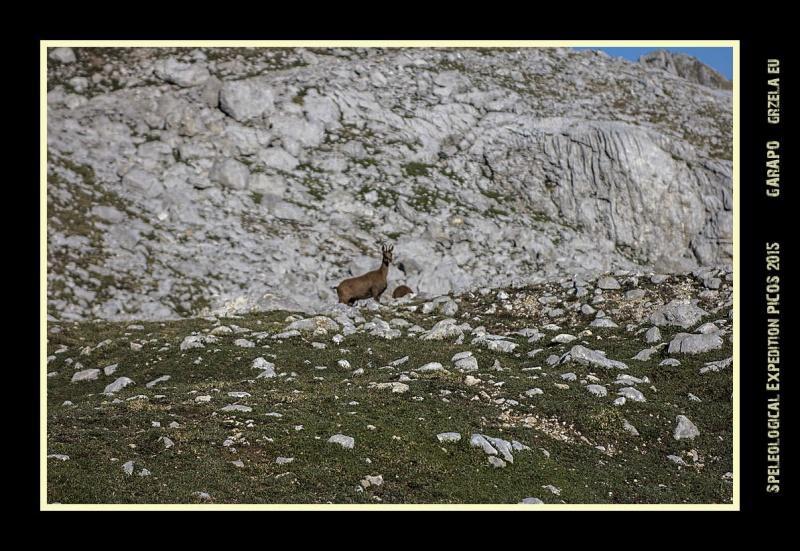 Picos2015-IMG_1697_grzela.eu
