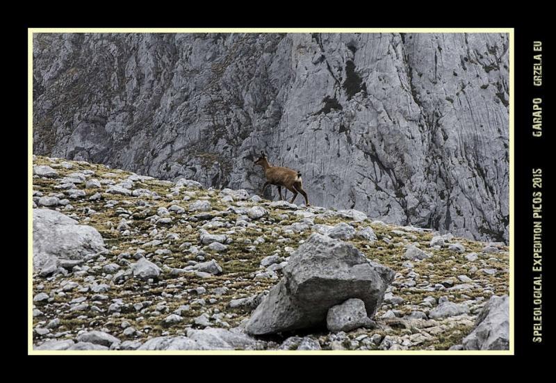 Picos2015-IMG_1714_grzela.eu