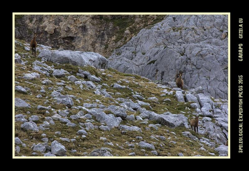 Picos2015-IMG_1718_grzela.eu