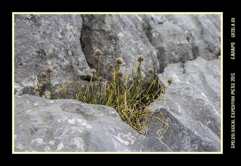Picos2015-IMG_1761_grzela.eu