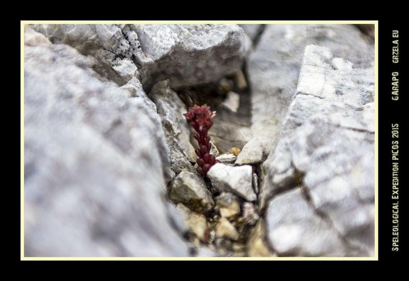 Picos2015-IMG_1782_grzela.eu