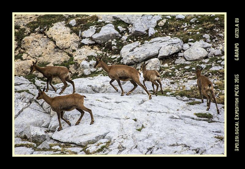 Picos2015-IMG_1843_grzela.eu