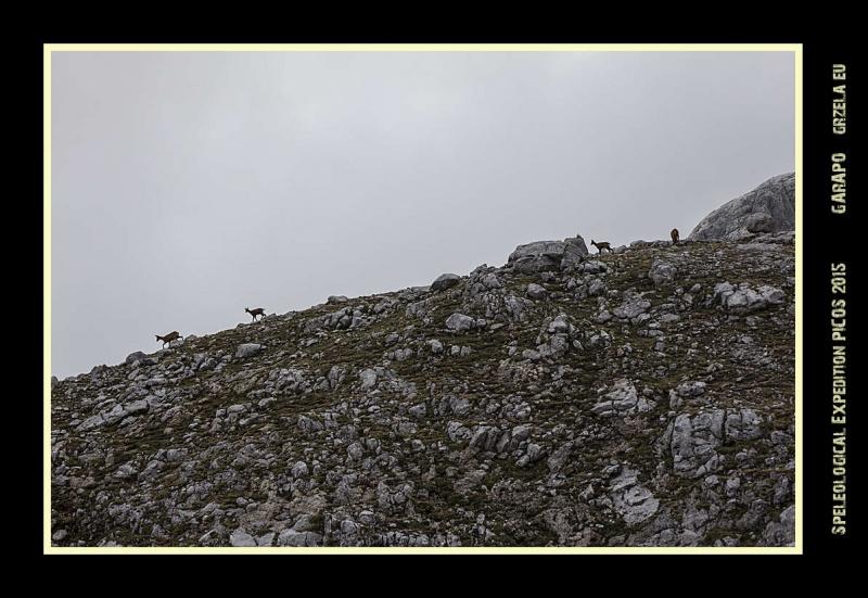 Picos2015-IMG_1857_grzela.eu