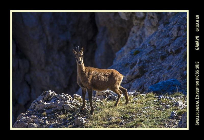 Picos2015-IMG_1893_grzela.eu