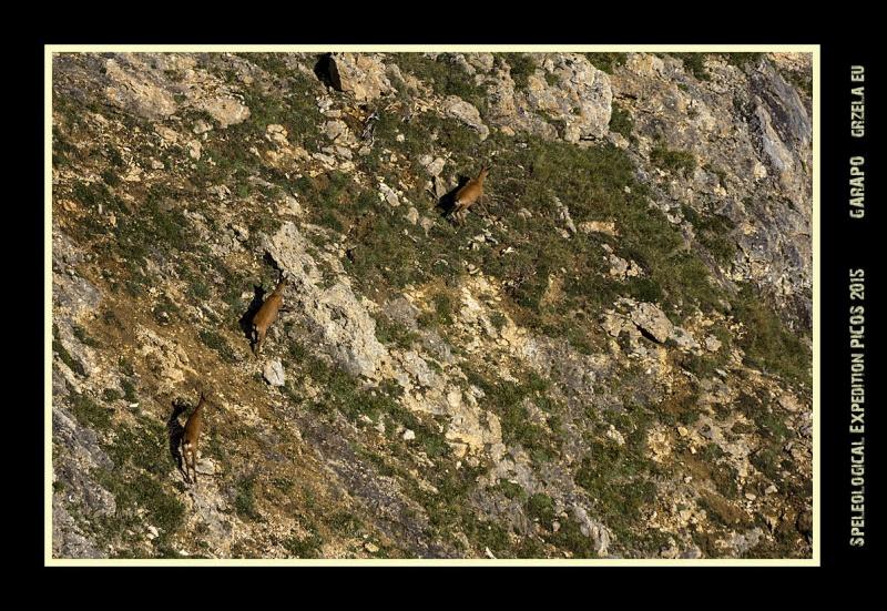 Picos2015-IMG_1898_grzela.eu