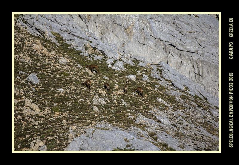 Picos2015-IMG_1911_grzela.eu