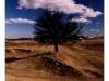 ukraina_2005_drzewo-2