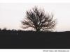 ukraina_2005_drzewo